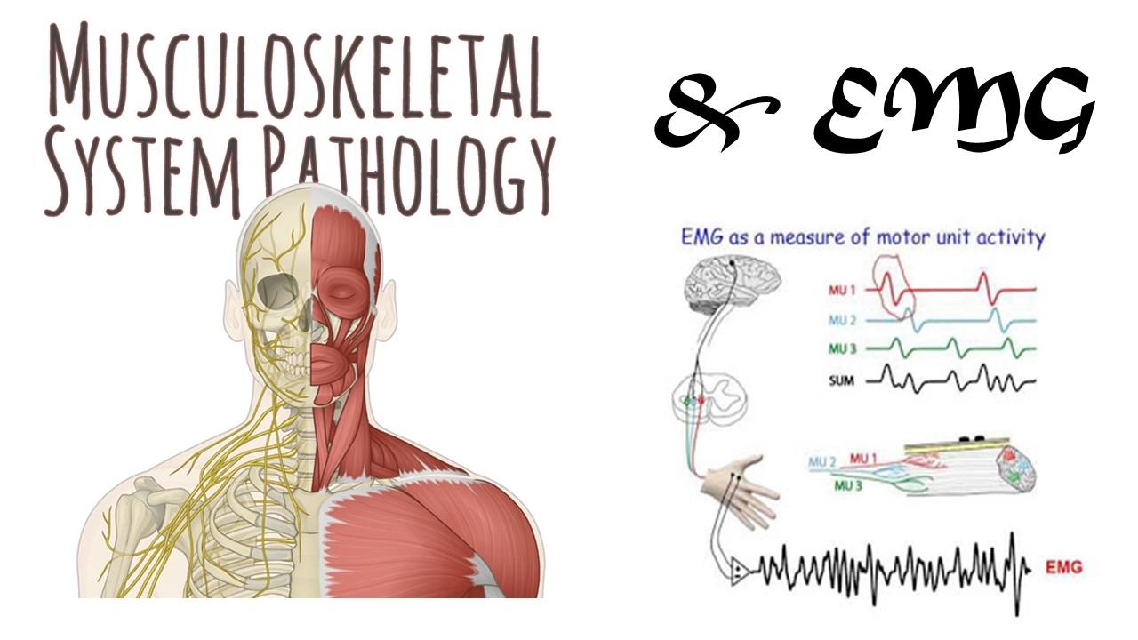 กภ 202 โรคของระบบกล้ามเนื้อ กระดูก และสัญญาณไฟฟ้าของกล้ามเนื้อ